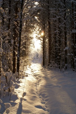 Choice Illuminated: The Gift of Winter Solstice